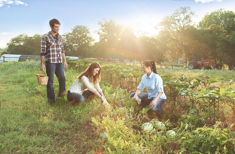 farm-field-994-650a