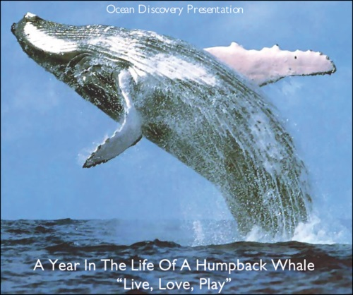 A Year in the Life of a Humpback Whale with John Mitchell