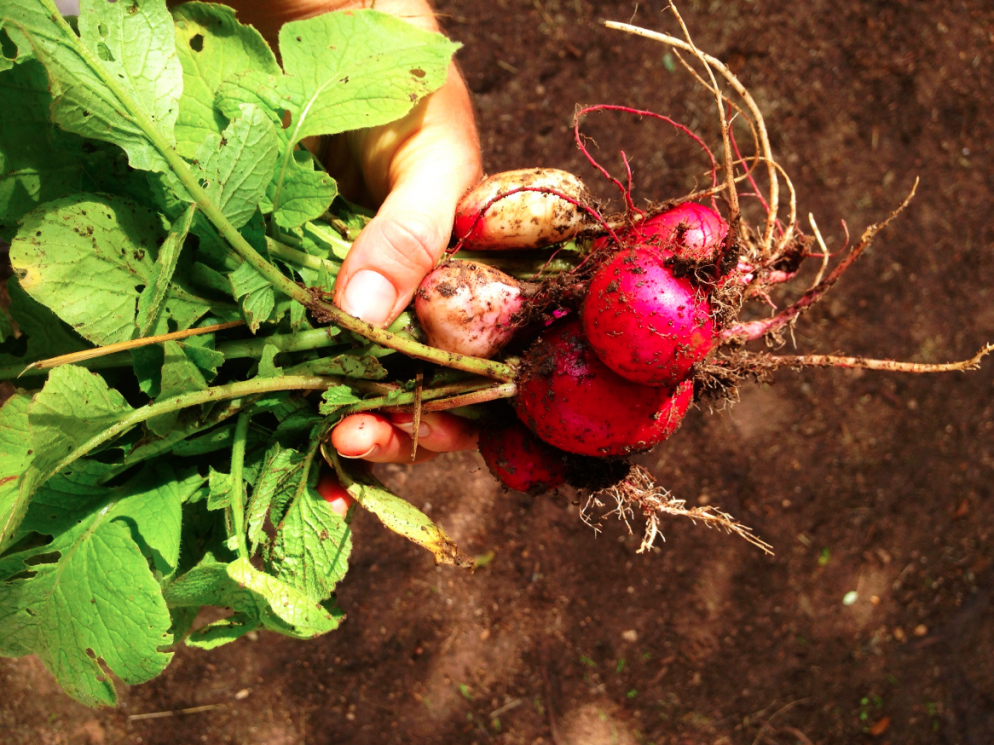 Farm to Table: What's In Season Right Now