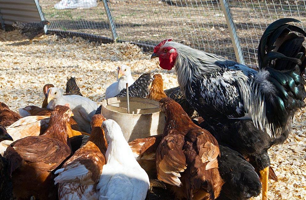 Travaasa Farm