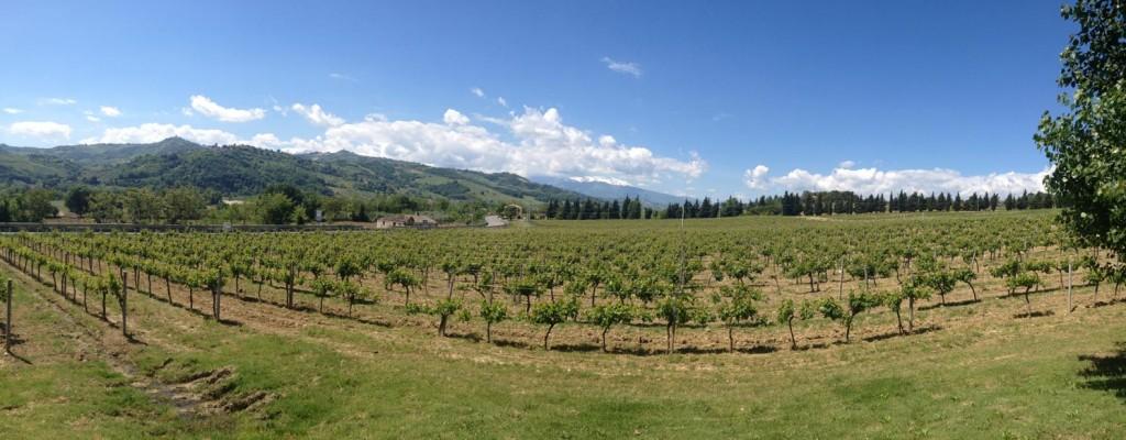 Abruzzo Winery